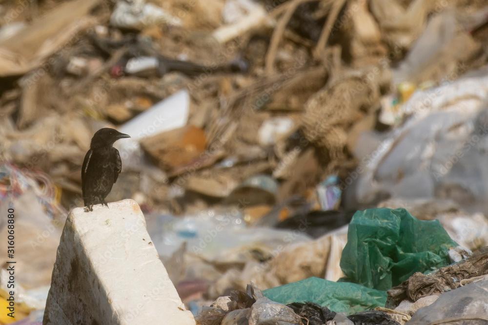 Fototapeta Bird on garbage dump. Plastic pollution of natural environment concept
