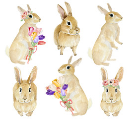 Easter rabbit clipart set. Hand drawn watercolor animal forest with flowers. Watercolor painting cute funny bunny. Baby animal.