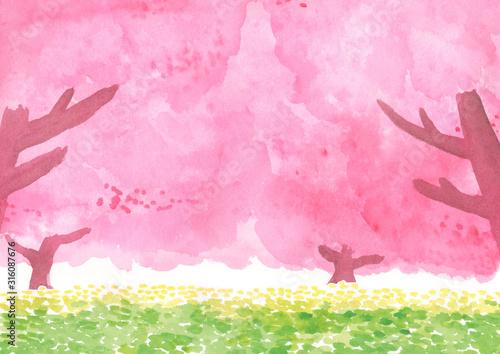 桜の木と菜の花 春の水彩 背景イラスト Fototapet