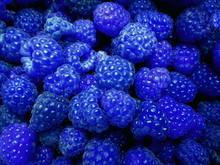 Fresh Sweet Blue Raspberries T...