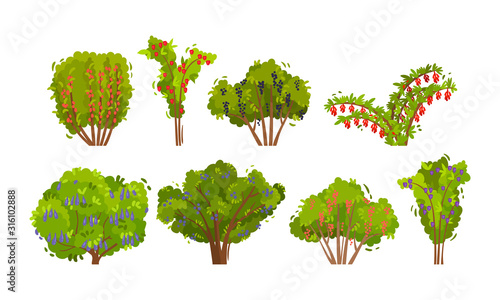 Garden Fruit Trees and Berry Bushes Vector Set Wallpaper Mural