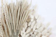 Rabbit Tail Flower Dry Flower On White Background.