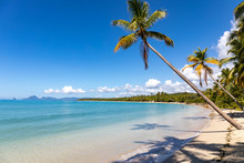 Sainte-Anne, Martinique, FWI - Leaning Coconut Palm Trees In Salines Beach. Diamond Rock (Le Diamant) In The Back