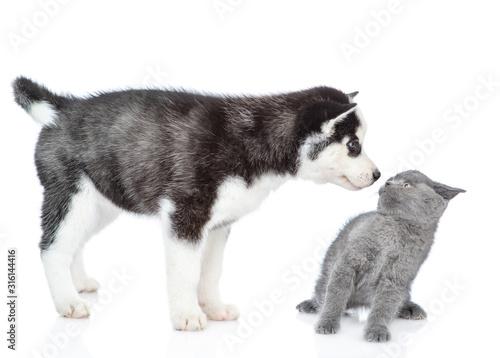 Fotografía Husky puppy snifs scared kitten. isolated on white background