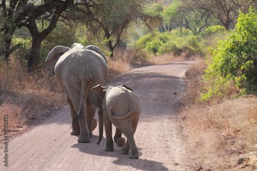 Photo Elephant in the wild