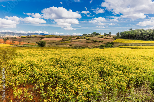 Obraz cultivated land fields landscaped near Kalaw Shan state in Myanmar (Burma) - fototapety do salonu