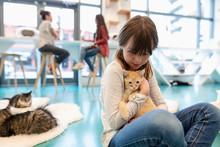 Girl Cuddling Kitten In Cat Cafe
