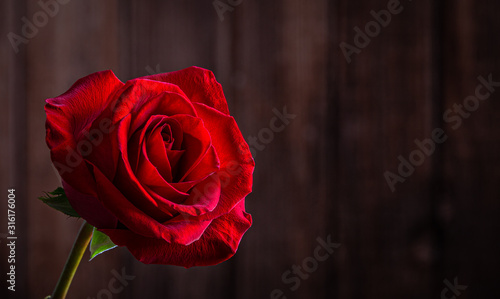 Red Rose Against Wooden Background