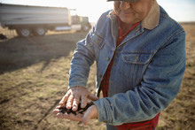 Male Farmer Examining Soil On Sunny Farm