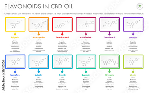 Fototapeta Flavonoids in CBD Oil with Structural Formulas horizontal business infographic illustration about cannabis as herbal alternative medicine and chemical therapy, healthcare and medical science vector. obraz