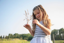 Curious Girl Holding Wheat Stalk In Sunny, Rural Field