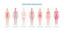 Female Body Biological Infogra...