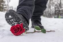 A Man Steps On A Red Rose Lyin...