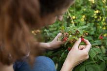 Young Woman Picking Wild Berri...