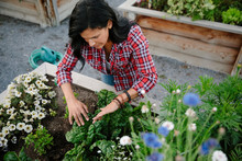 Woman Tending To Plants And Flowers In Community Garden