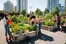 Man Teaching Gardening To Young Adults In Sunny, Urban Community Garden