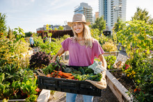 Portrait Happy, Confident Young Woman Carrying Fresh Harvested Vegetables In Sunny, Urban Community Garden