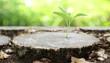 Leinwanddruck Bild - Plant growing out of  tree stump