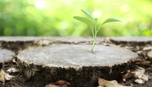 Valokuva Plant growing out of  tree stump