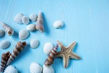Sea Shells On A Blue Wooden Ba...