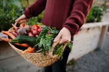 Close Up Woman Holding Basket Of Fresh Harvested Vegetables In Garden