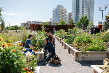 Family Gardening In Sunny, Urb...