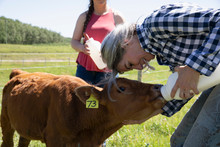 Mature Woman Bottle Feeding Calf