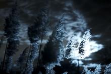 Plantes Gelées Post Apocalyptique Lune Bleue Soleil Bleu