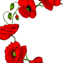 Beautiful Wreath Of Red Poppies With Buds On A White Background. Realistic Style. Spring Pattern. Rustic Decor. Template For A Card With Flowers.