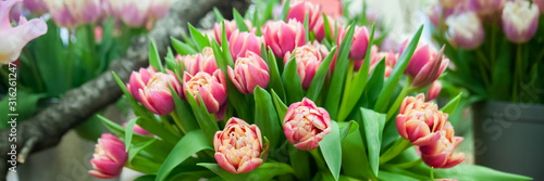 Photo Banner Spring flowers background bunch of colorful tulips , Hello Spring and  Wo