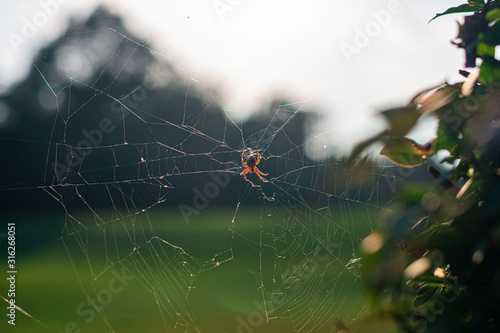 wide angle shot of a spider resting on it's web backlit by the afternoon sun Canvas Print