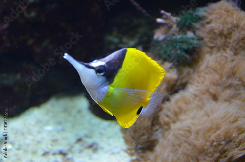 Tropical fish in aquarium, Berlin Canvas Print