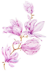Watercolor hand painted magnolia flowers illustration on white background. Perfect for print, room decor, pattern, fabric, textile design, wrapping paper, scrapbooking, poster, blog.