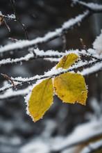 Wald Im Winter Mit Schnee Und ...