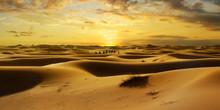 Caravan Of Camel In The Sahara...