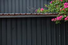 Bougainvillea Flowers Again Metal Wall