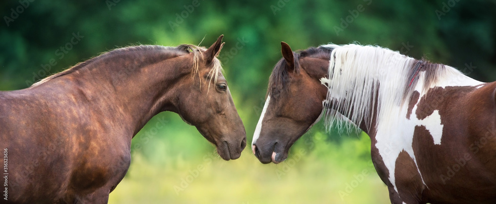 Obraz Two horse pinto and Silver dapple close up portrait fototapeta, plakat