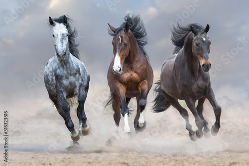Naklejki konie   horse-herd-run-free-on-desert-dust-against-storm-sky