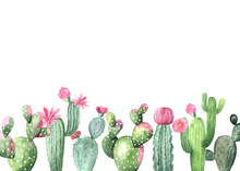 Watercolor Hand Painted Exotic Cactus