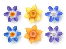 Spring Flowers Vector Set. Daf...