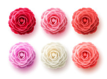 Camellia Flowers Vector Set. Camellia And Rose Flower Collection For Spring With Various Colors For Spring Season Isolated In White Background. Vector Illustration.