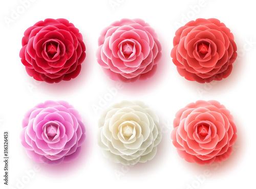 Fényképezés Camellia flowers vector set