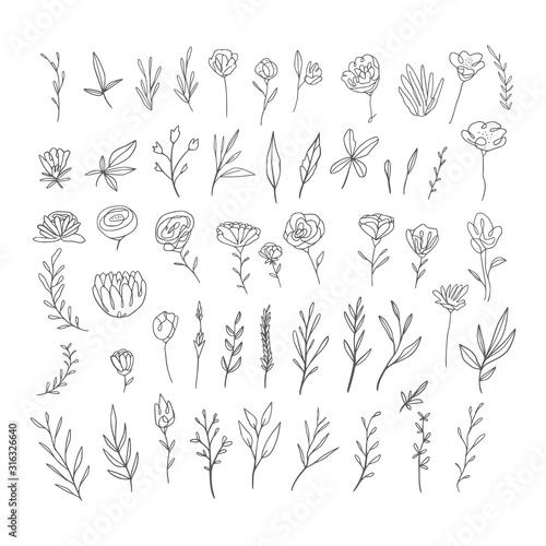 Obraz Hand drawn botanical elements collection - fototapety do salonu