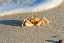 Crab On The Sand On The Beach ...