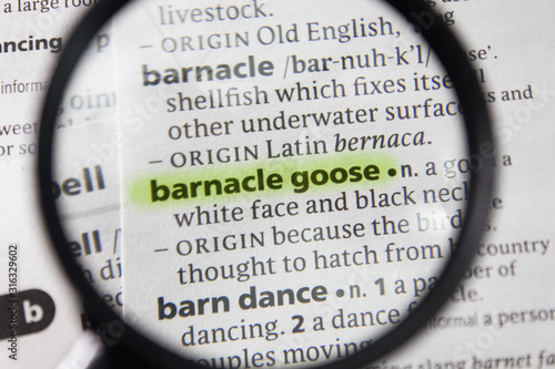 The word or phrase barnacle goose in a dictionary. Canvas Print