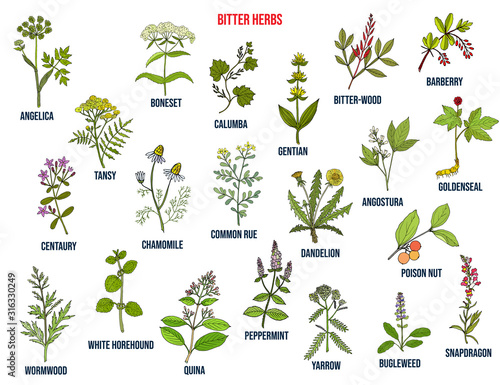 Photo Bitter herbs collection
