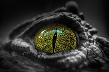 Close-up Of A Crocodile's Eye