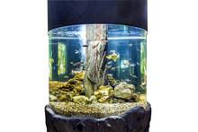 Round Large Aquarium With Trop...
