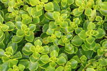 Natural Plant Texture From Suc...