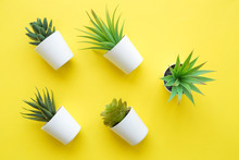 Top View Of Different Plants In Pots Abstract On Yellow.